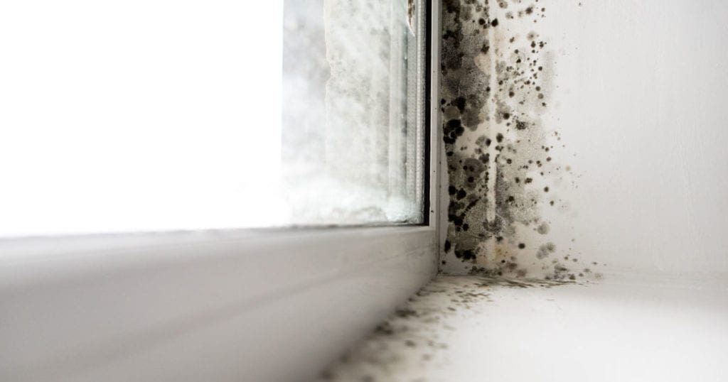 Close-up of mold growing along a window frame on a wall
